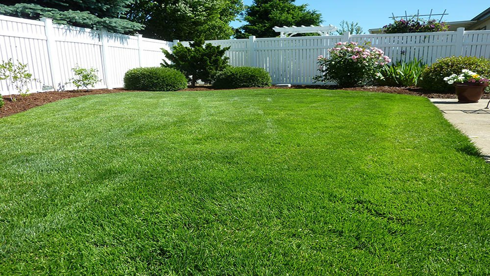 Coastal Pacific Landscaping Service including Landscape maintenance of backyards, such as mowing the grass and pruning the shrubs