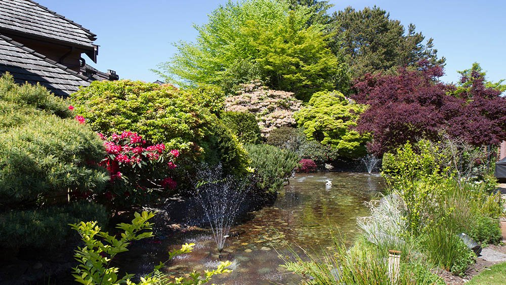 Coastal Pacific landscaping Service including landscape maintenance of trees and shrubs surrounding a pond with fountains