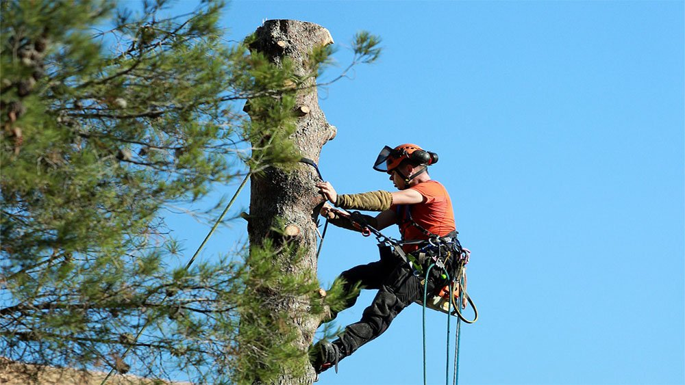 Landscape Service including tree care services such as tree removals by climbing
