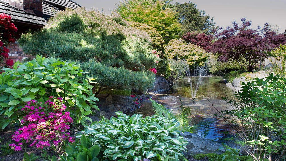 Vancouver Landscaping Tree and shrub maintenance by a pond with water feature